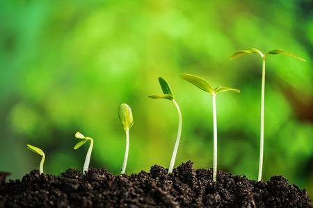 植物の新しい生活 写真素材