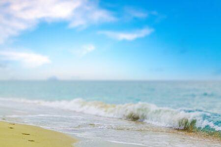 water's edge: Shell, Beach, Waters Edge.