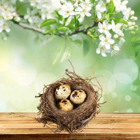 animal nest: Eggs, Animal Nest, Nest Egg.