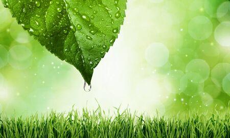 leaf water: Leaf, Water, Environmental Conservation.
