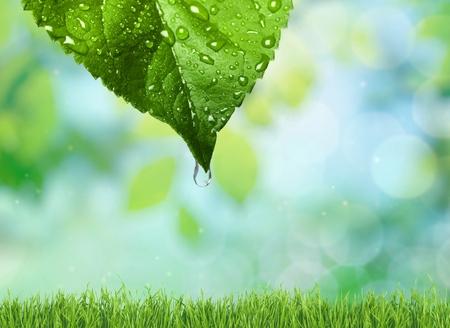 Hoja, Agua, Conservación del ambiente. Foto de archivo