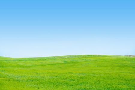 horizons: Sky, Grass, Field. Stock Photo