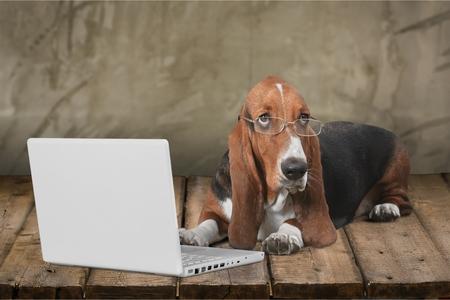 obediencia: Perro, ordenador, Mascota. Foto de archivo