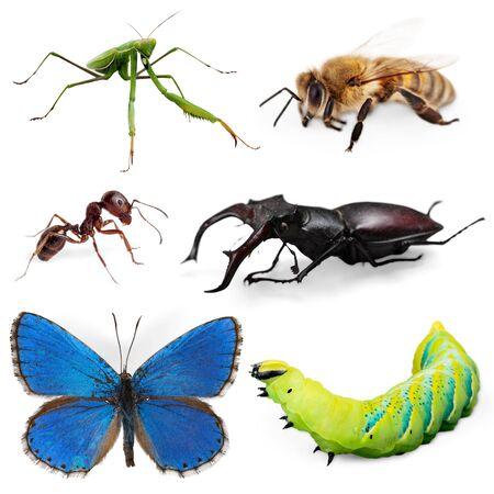 mantis: Praying Mantis, Insect, White. Stock Photo