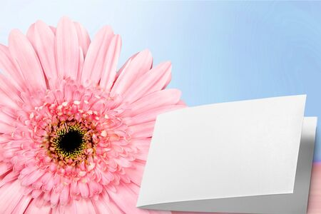 descriptive colours: Flower, Single Flower, Pink.