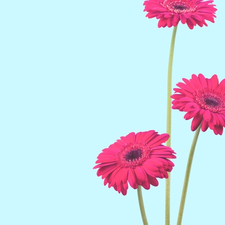 gerbera daisy: Gerbera Daisy, Daisy, Daisy Family.