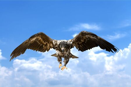 Hawk, Bird, Eagle. Imagens