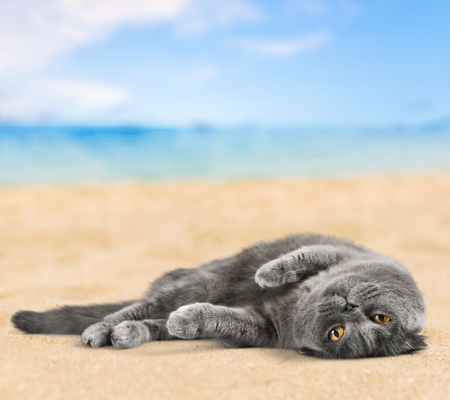 gray cat: Cat, cats, kitty. Stock Photo