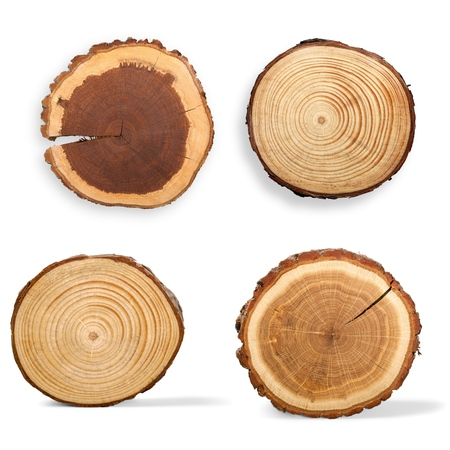 trunks: Tree Ring, Log, Wood. Stock Photo