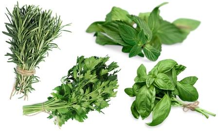 the freshness: Basil, Herb, Freshness. Stock Photo