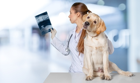 Vet, hond, dierenarts.