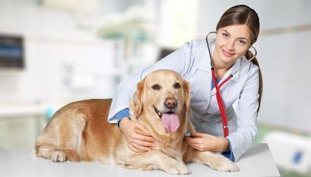 Veterinarian, vet, dog. Stock Photo