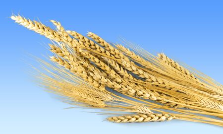 cereal plant: Wheat, Cereal Plant, Oat. Stock Photo