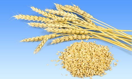 plant seed: Wheat, Cereal Plant, Seed. Stock Photo