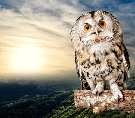 Owl, eye, black.