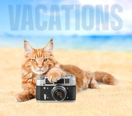 pet photography: Cat, photography, photo. Stock Photo