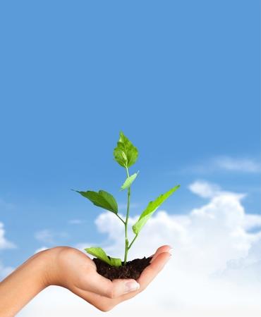 pflanze wachstum: Menschliche Hand, Pflanze, Wachstum.