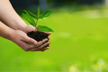 origins: Human Hand, Plant, Growth.