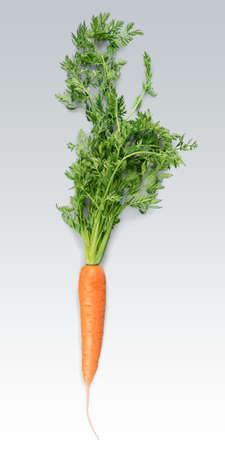 Carrot, Isolated, Single Object. Stock Photo