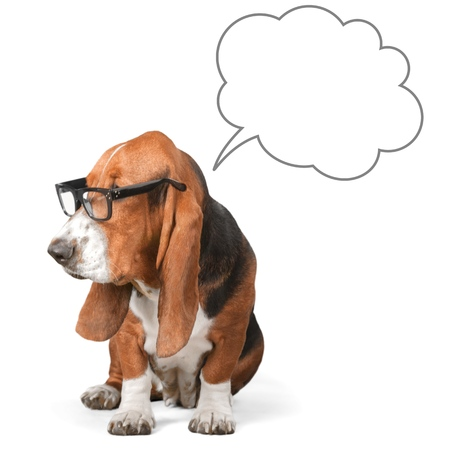 humor: Dog, Glasses, Humor. Stock Photo