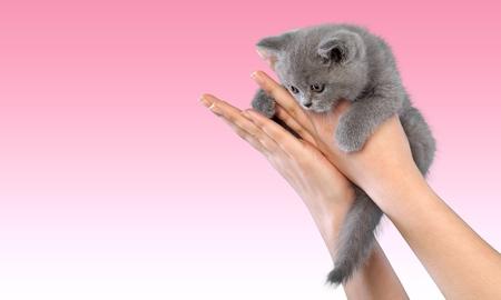whiskar: Human Hand, Kitten, Domestic Cat. Stock Photo