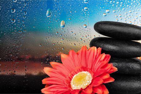 single flower: Stone, Flower, Single Flower.