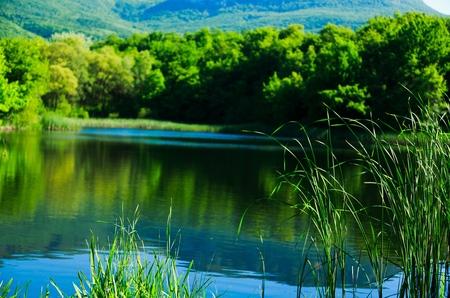 back yard pond: Landscaped, Formal Garden, Landscape.