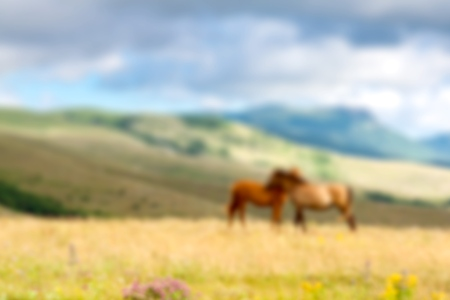 mare and foal: Animal, foal, mare.