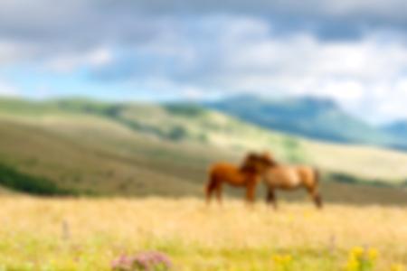 contemporaneous: Animal, foal, mare.