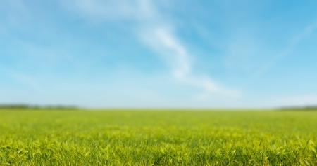 cielos abiertos: Relájese, la primavera, la libertad.