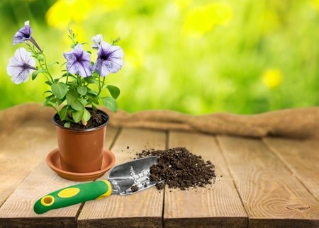 Gardening, Flower Pot, Potted Plant.