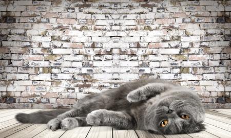 kitty cat: Cat, cats, kitty. Stock Photo