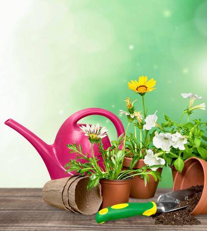 gardening equipment: Gardening Equipment, Flower Pot, Flower.