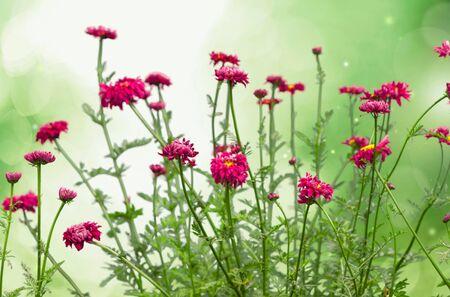 fiori di campo: Fiori, fiori selvatici, verde.