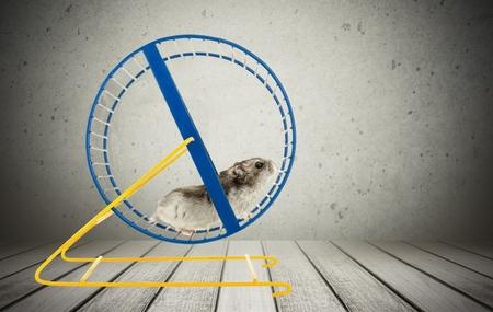 Hamster, Wheel, huisdieren. Stockfoto