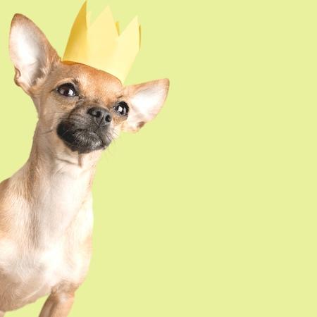 man's best friend: Couch, crown, king.