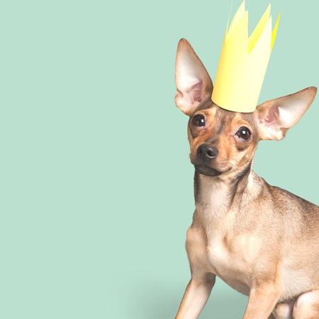 mans best friend: Couch, crown, king.