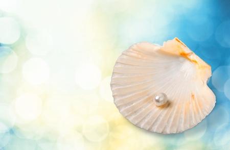 almeja: Shell, estrellas de mar, almeja.
