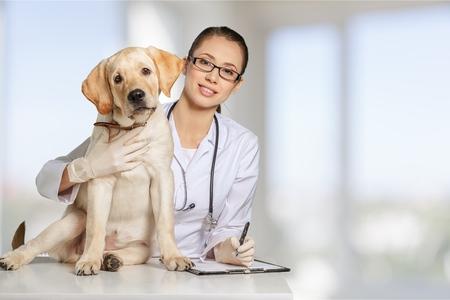 zdrowie: Lekarz weterynarii, weterynarz, zwierzę. Zdjęcie Seryjne