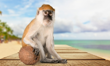 primate: Monkey, Banana, Primate.