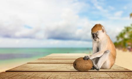 primate: Monkey, Primate, Isolated.