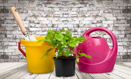 gardening equipment: Gardening, Gardening Equipment, Plant.