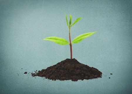 pflanze wachstum: Pflanze, Wachstum, Blatt. Lizenzfreie Bilder