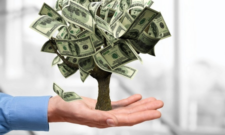 Money Tree, Currency, Growth. Stock Photo