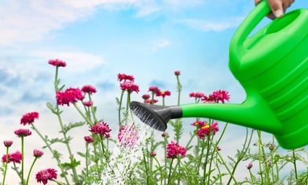 fleurs des champs: Fleurs sauvages, fleurs sauvages, vert. Banque d'images
