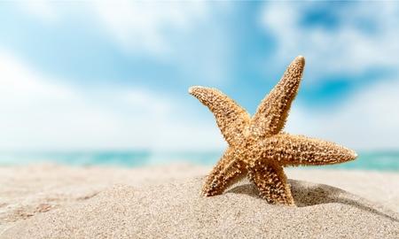 Beach, Seesterne, Karibik. Standard-Bild