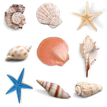 echinoderm: Collection, shell, object.