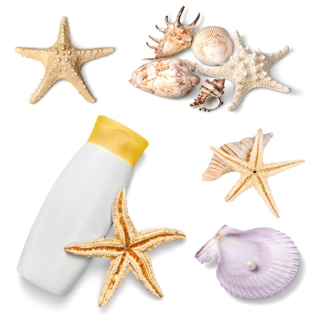 mollusk: Coral, mollusk, wallpaper. Stock Photo