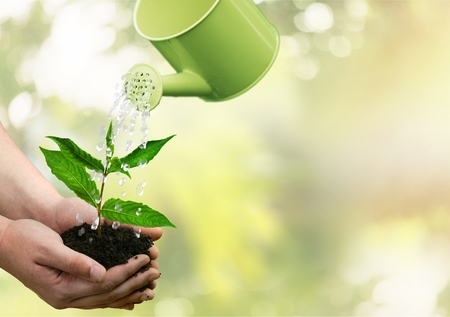 Watering Can, Watering, Growth. Stock Photo
