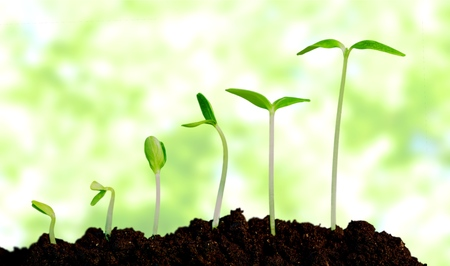 Crecer, crecer, planta.